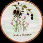 Early Bumblebee 1