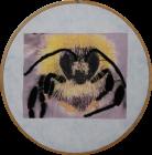 Early Bumblebee 2