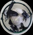 Asian Swallowtail by Audrey John