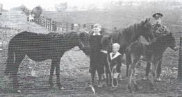 WW1 photograph of Albert Crandon