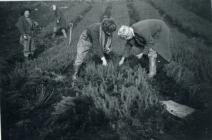 Field Working (2)