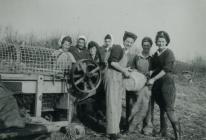 Land Army women using a threshing machine