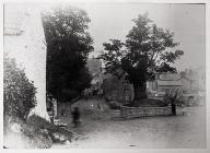 The Old Elm Tree, Cadoxton