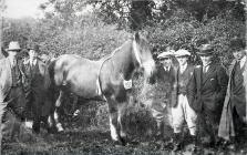 The Cowbridge Agricultural Show