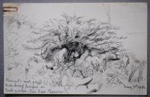 Pheasant's nest, nine eggs, under dwarf...