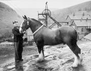 Ceffylau yng nglofeydd Cymru